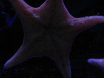 acquariodigenova20_20071211_1944250014