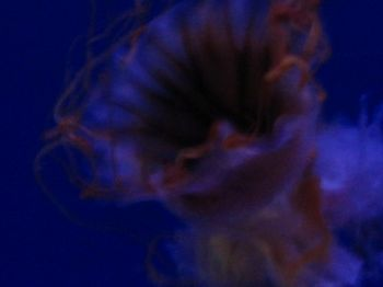 acquariodigenova5_20071211_1803779662