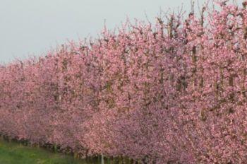 primavera14