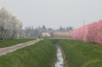 primavera15