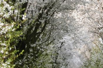 primavera7